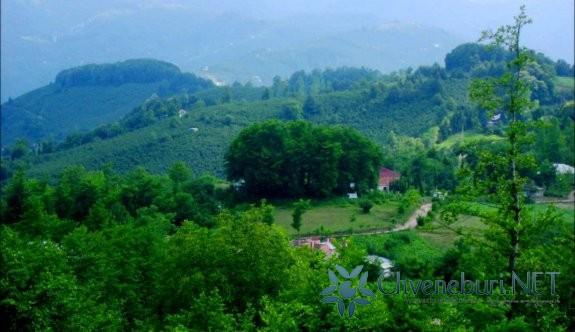 Yeni Sayaca Köyü - Ulubey - Ordu