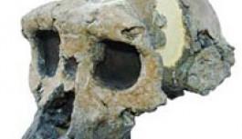 """Gürcüstan""""da 1.8 milyon Yıllık Kafatası"""