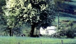 Köyüm Hamidiye